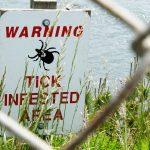 Diagnosing Lyme disease